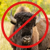 A photograph of an American Bison with the red slashed NOT circle overlaying it